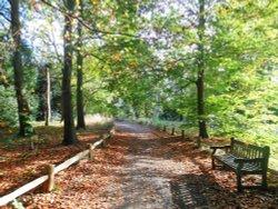 Conservation area, Kew Gardens
