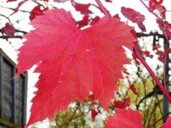Leaf, Kew Gardens