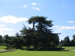 Lacock Abbey Grounds (2) - July, 2008
