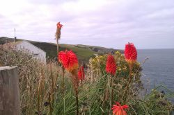 A floral view from beyond Port Isaac