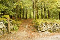 Rydal Park Woods