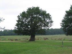 Richmond Park Deer (1) - June 2003