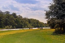 Buttercups at Gunthorpe