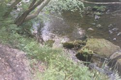 Beck Hole - View of River from Path to Thomason Foss