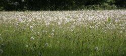 Emmetts Meadows