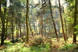 Badby wood