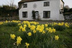 Cottage Green Wallpaper