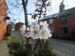 Blossom, Bilton Village