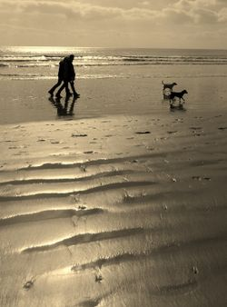 In Step at Camber, East Sussex