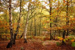 Autumn Colours on Cannock Chase