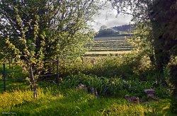 Stour Valley Spring, Shillingstone.