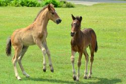 New Forest Ponies Wallpaper