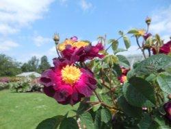 Rose Garden, Kew gardens