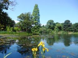 Lake, Kew Gardens