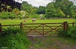 A Dorset Garden, Shillingstone.