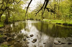 River Rothay Rydal Woods