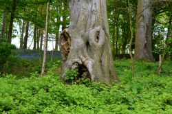 The Trees with a face and suprise beyond