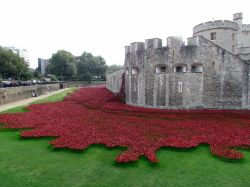 poppies at the Tower of London Wallpaper