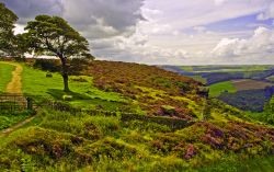 Baslow Edge View Wallpaper
