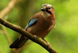 Jay in Heaton Park, Prestwich, Manchester
