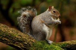 Squirrel in Heaton Park, Prestwich, Manchester