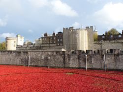 Poppies at The Tower Wallpaper