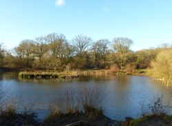 Isle of Wight Pond From The Other Side