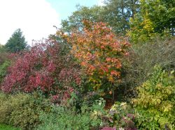 Autumnal colours at Borde Hill, 10th October 2012