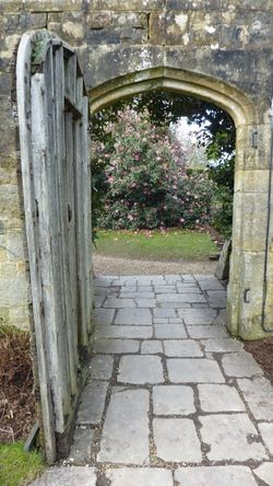 Camelias through the door, Nymans 27th February 2015