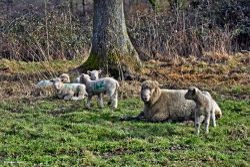 Stour Valley Winter, North Dorset Trailway.