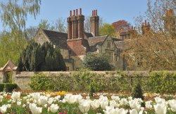 Lewes Grange Tulips