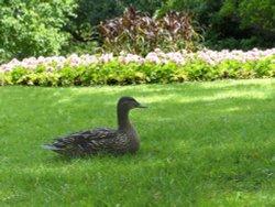 The Flower Gardens Greenwich Park