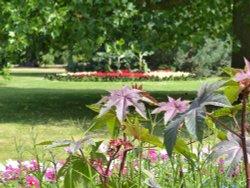 Flower Gardens Greenwich Park