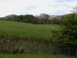 Cumbrian Landscape near Torver