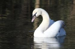 Swan Danson Park