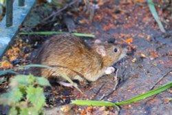 Rat Danson Park