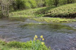 Springtime in english countrysaide river Wye Monsall Head