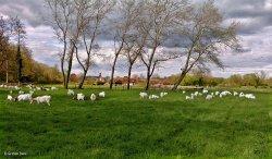 Stour Valley Spring Shillingstone