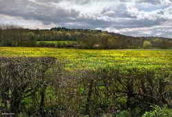 Stour Valley Spring North Dorset