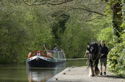 Horse-Drawn Narrowboat on the Kennet and Avon Canal at Hemstead near Newbury, Berkshire