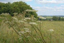 Wheatfield, Warkworth, Northamptonshire