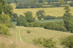 The Ashridge above Ivinghoe, Buckinghamshire
