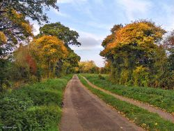 Srour valley Autumn