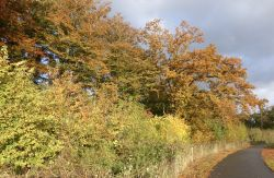 Autumn Colours on the Road to Caen Hill Locks near Rowde, Wiltshire.