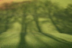 Tree Shadows, Brough Park, Leek, Staffordshire
