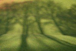 Tree Shadows, Brough Park, Leek, Staffordshire