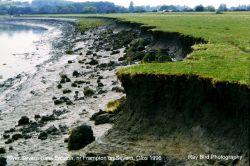 Bank Erosion, River Severn, nr Frampton on Severn, Gloucestershire 1996