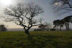 Tree Silhouette on Gun Hill near Meerbrook above Leek, Staffordshire
