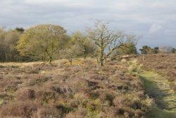 Gun Hill above Meerbrook, Staffordshire Moorlands