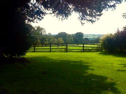 View with a thousand year old tree, leek Staffordshire